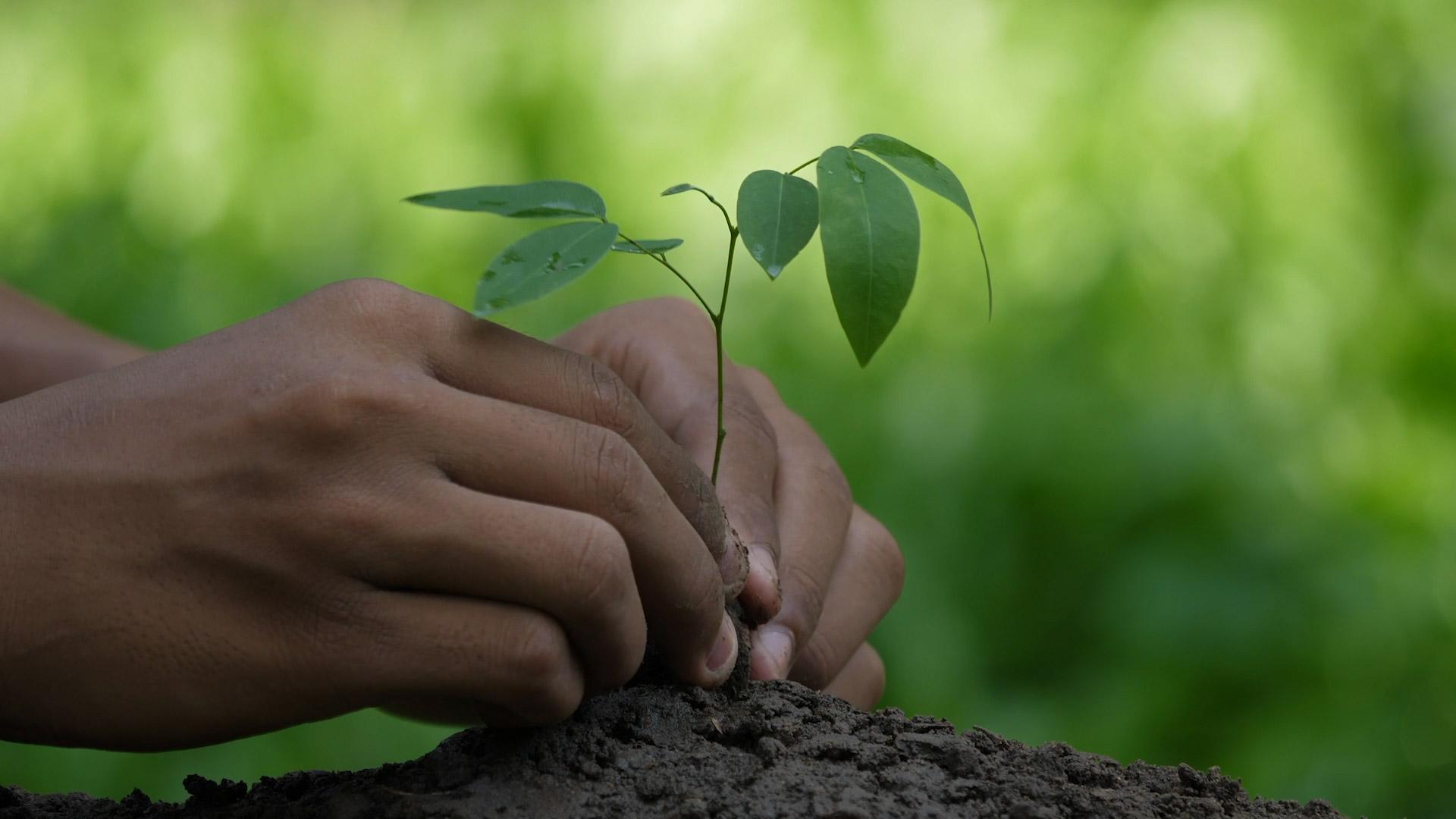 hout100procent-header-duurzaamheidsvideo