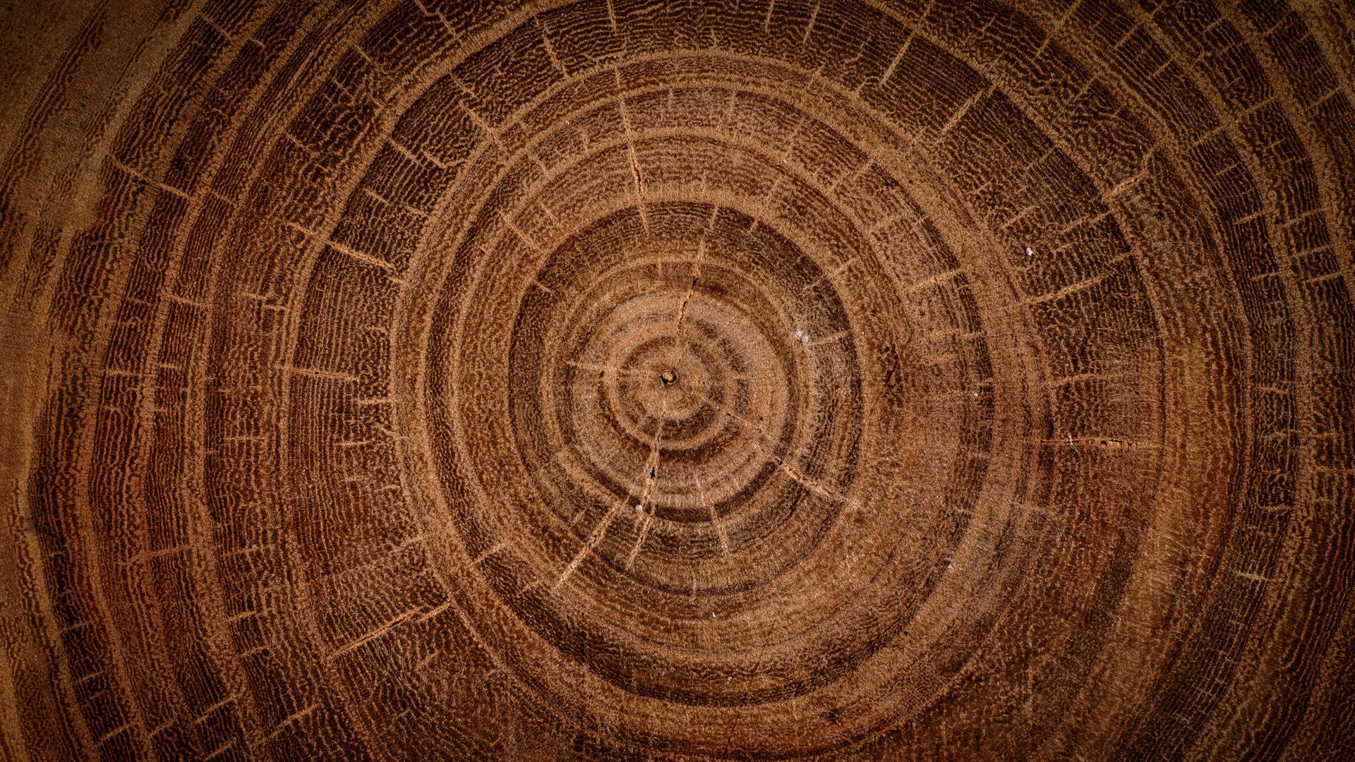 hout100procent-header-trots-op-onze-medewerkers