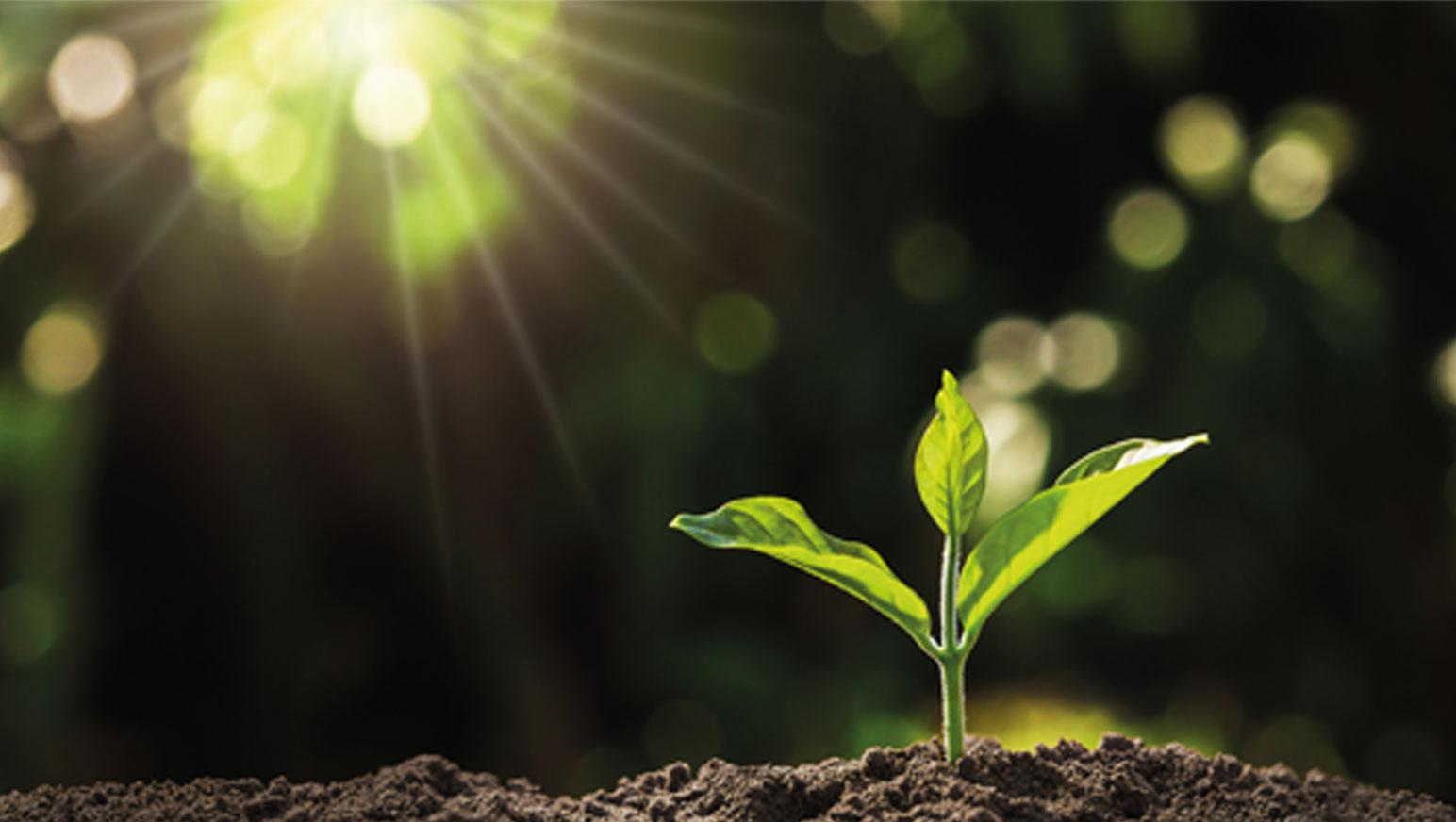 foto van klein boompje dat duurzaam is geplant